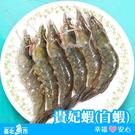 ◆ 台北魚市 ◆ 台東 深海水養殖 貴妃蝦 ( 白蝦 ) 250g (約7~9尾裝)