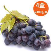自然農法-頂級巨峰葡萄2400g/盒x4盒(冷藏宅配)