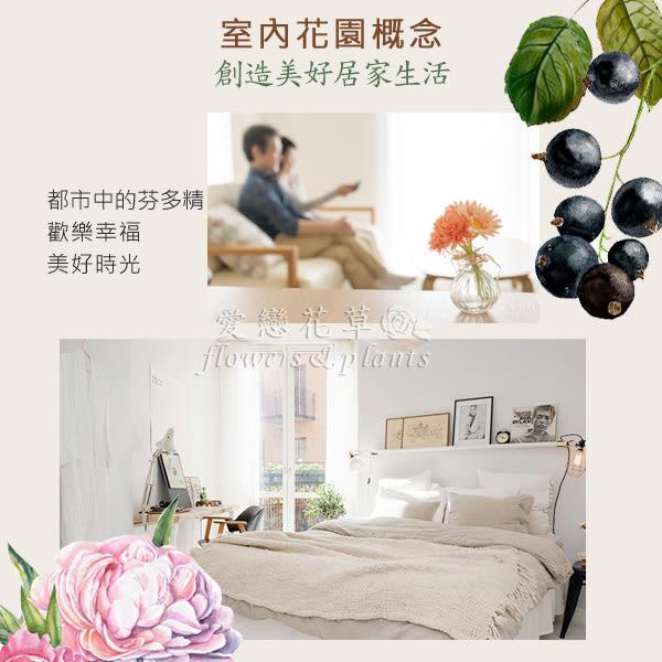 【愛戀花草】藍風鈴 室內香氛噴霧精油 100ML (JoMa系列)《買一送一 / 共2瓶》