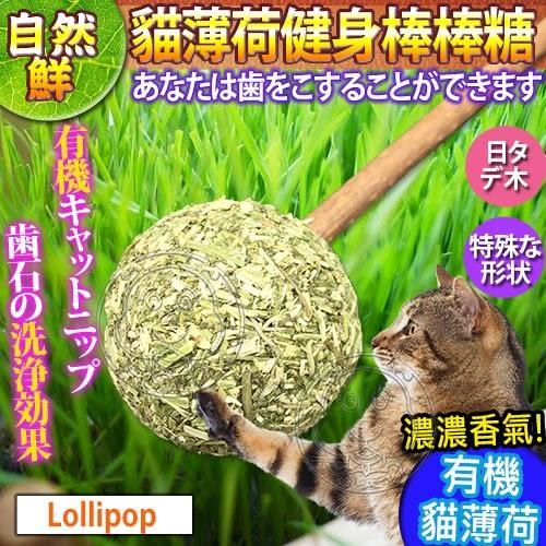 【培菓平價寵物網】自然鮮系列》貓薄荷健身棒棒糖貓玩具NF-021