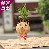迎光 吉祥小狗苔球【免運直出】
