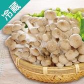 【有機】轉型鴻喜菇(100g±5%/包)【愛買冷藏】