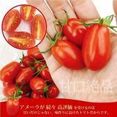 【果之蔬-全省免運】玉女溫室小蕃(番)茄 爆甜多汁薄皮x2盒(600g±10%含盒重/盒)