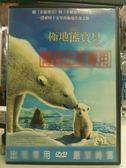 影音大批發-B01-010-正版DVD*動畫【極地熊寶貝:拿努的歷險】一段歷時十五年的極地生命之旅!