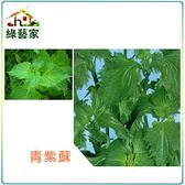 【綠藝家】大包裝F09.青紫蘇(青香,日本進口)種子12克(約6000顆)