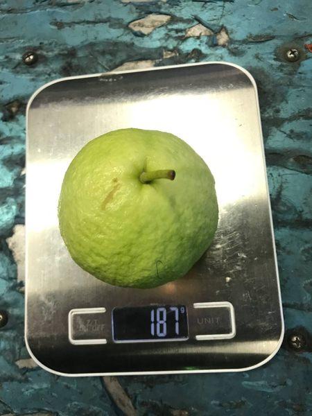 【果之蔬-全省宅配免運】頂級套網燕巢牛奶珍珠芭樂X1箱(5斤±10%含箱重/箱)