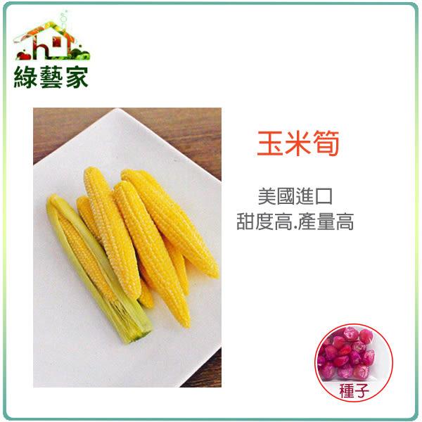 【綠藝家】大包裝G97玉米筍種子90克(約350顆)