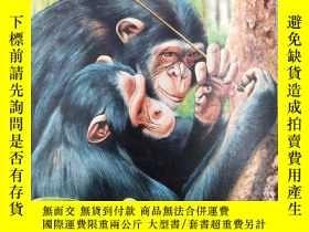 二手書博民逛書店Apes罕見and Monkeys ~ Easy ReaderY