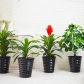 大型仿真植物鴻運當頭海棠橡皮樹落地綠植盆景客廳室內裝飾假盆栽【免運】