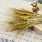 【BlueCat】天然麥穗兔尾草乾花 乾燥花 拍攝道具 拍照背景
