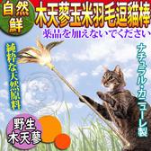 【培菓平價寵物網】自然鮮》天然木天蓼玉米羽毛逗貓棒-約60cm