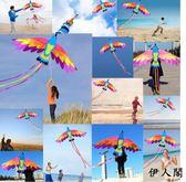 鳳凰風箏七彩鳳凰風箏成人兒童大型風箏 伊人閣