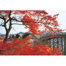 【P2 拼圖】紅葉的錦帶橋拼圖1000片...