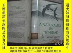 二手書博民逛書店A罕見NATURALIST IN TRINIDADY14158