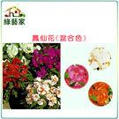 【綠藝家】H31.鳳仙花(混合色,高35cm)種子20顆