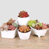 白瓷經典系列花盆多肉植物簡約陶瓷花盆