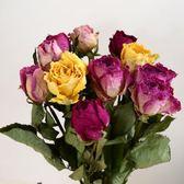 干花玫瑰干花云南干花真花DIY空間裝飾干花—聖誕交換禮物