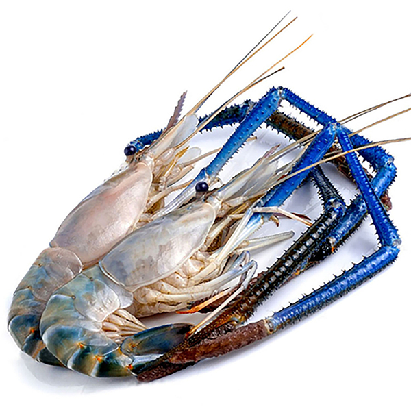 ㊣盅龐水產 ◇泰國手臂蝦4/5◇淨重400g±5%g/隻 零售$485元/隻 ◇泰國手臂蝦 熊蝦 草蝦 很大 夯肉
