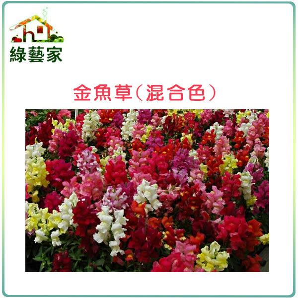 【綠藝家】大包裝H14.金魚草(混合色,高15cm)種子2克(約6000顆)