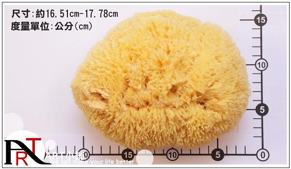 "『ART小舖』希臘Artist's CO657 Coarse Natural Sponge 粗質繪畫清潔專用天然海綿 6.5-7""英吋 NO.26571"