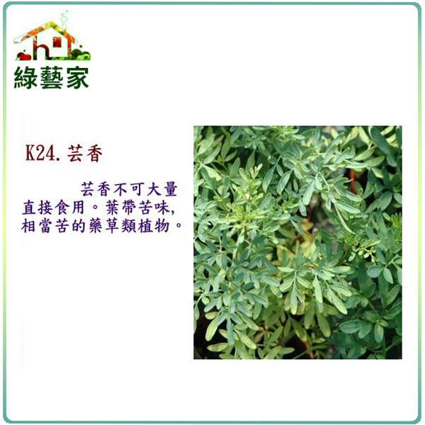 【綠藝家】大包裝K24.芸香種子800顆