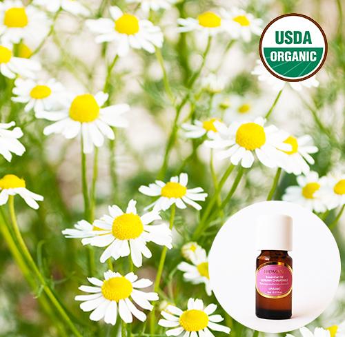 有機精油5ml-德國洋甘菊 German Chamomile Organic Essential Oil ~ 美國USDA有機認證