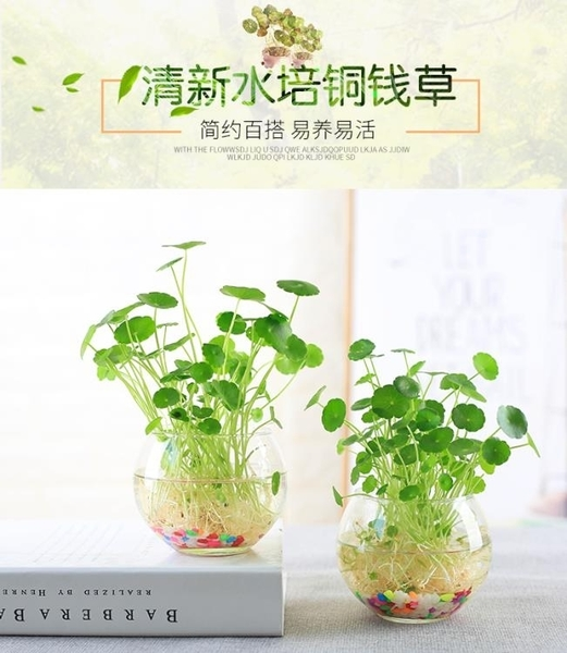 簡約透明玻璃花瓶水培銅錢草花盆水養綠蘿植物風信子插花瓶小清新