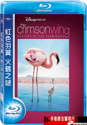 【停看聽音響唱片】【BD】紅色羽翼:火鶴之謎 The Crimson Wing: Mystery Of The Flamingos