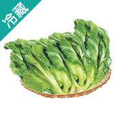 台灣長年菜700G/顆【愛買冷藏】