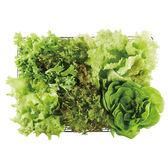 高品質無毒蔬菜  綜合萵苣 200g 四人份 六入【NICE GREEn美蔬菜】