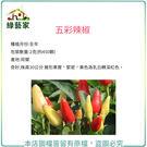 【綠藝家】大包裝P01.五彩辣椒種子2克...