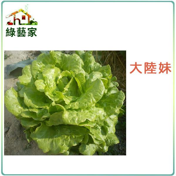 【綠藝家】A19.大陸妹種子2500顆(日本進口大陸A菜)