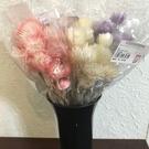日本進口永生花花材,大地農園岩石珊瑚小銀菊32001、32010,單朵價
