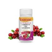 (買6送2 特價$5800)【UGND】美婦思康蔓越莓乳酸菌膠囊 75顆/瓶 (升級版)