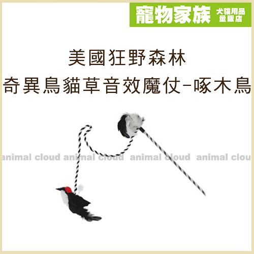 寵物家族-美國Play-N-Squeak狂野森林 奇異鳥系列貓草音效魔仗-啄木鳥