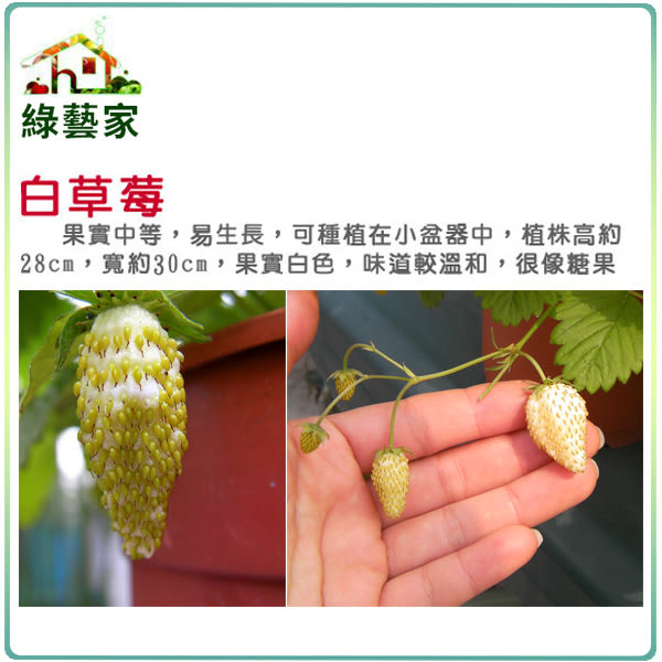 【綠藝家】I08.糖果草莓種子(白色.英國進口)8顆
