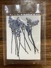薰衣草壓花,一份12支裝