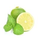 Visakha - 萊姆 Lime 單方精油 (100ml)