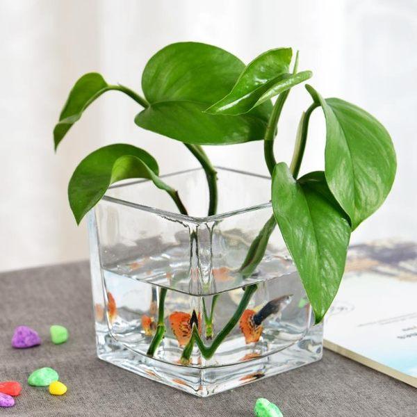 花瓶簡約水培玻璃器皿透明方缸綠蘿睡蓮銅錢草水培花盆玻璃花瓶全館滿千88折