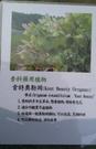 花花世界_香草植物--**肯特奧勒岡**--食材香料/ 5吋盆/ 高10-20cm/TS
