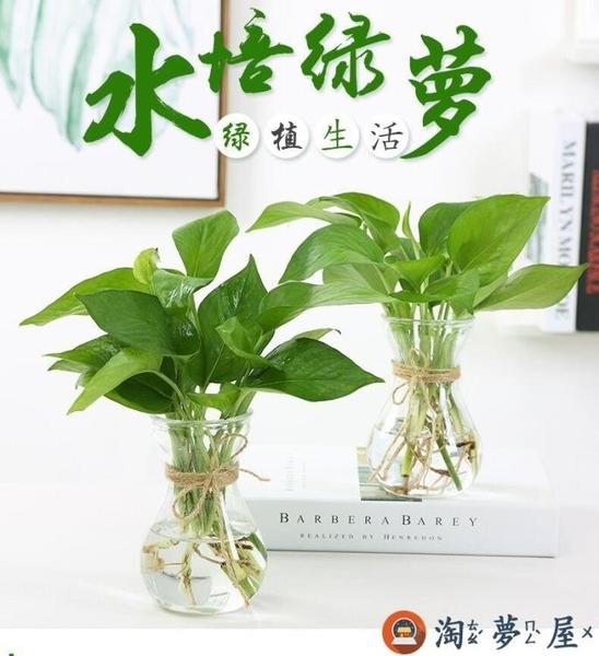 實惠6個裝 簡約水培植物玻璃花瓶花盆透明水養綠蘿插花瓶【淘夢屋】