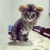頭飾假發帽子寵物狗狗貓咪頭套 小狗貓貓獅子頭套【宅貓醬】