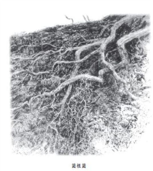 樹,擁抱了全世界:世界環境大師傾聽森之音