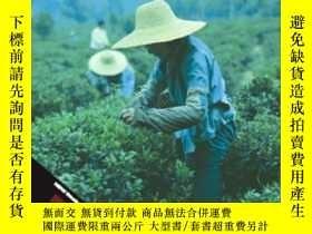 二手書博民逛書店Developing罕見World 99 00 (annual Editions : Developing Wor