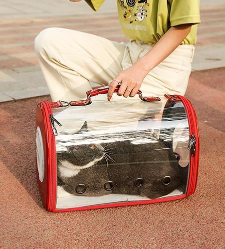 寵物背包 貓包透明外出便攜包貓咪寵物外帶攜帶雙肩背包透氣書包太空艙貓袋 JD 萬聖節狂歡
