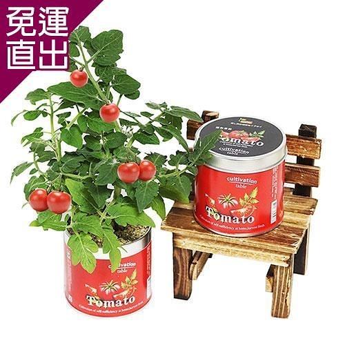 迎光 Cultivation Table栽培罐迷你番茄【免運直出】