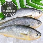 當季肥碩大黃魚(400g±10%/隻)(食肉鮮生)