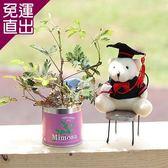 迎光 熊麻吉栽培罐組含羞草【免運直出】