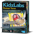 《4M科學探索》人體器官模型 Human Torso╭★ JOYBUS玩具百貨