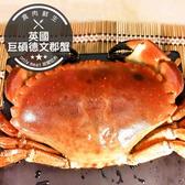 英國巨碩德文郡蟹(麵包蟹)(800g±10%/隻)(食肉鮮生)